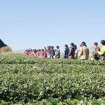 小さな生き物と、茶畑を歩こう〜世界のお茶処 静岡で学べる特別授業